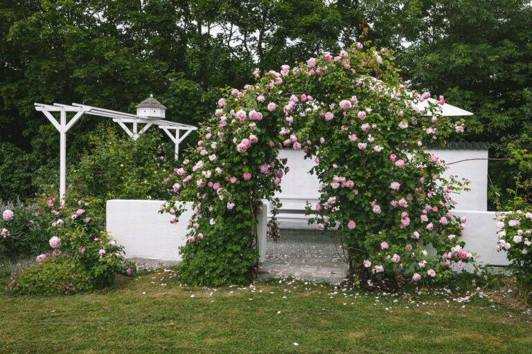 An angel in my home - Öppen Trädgård